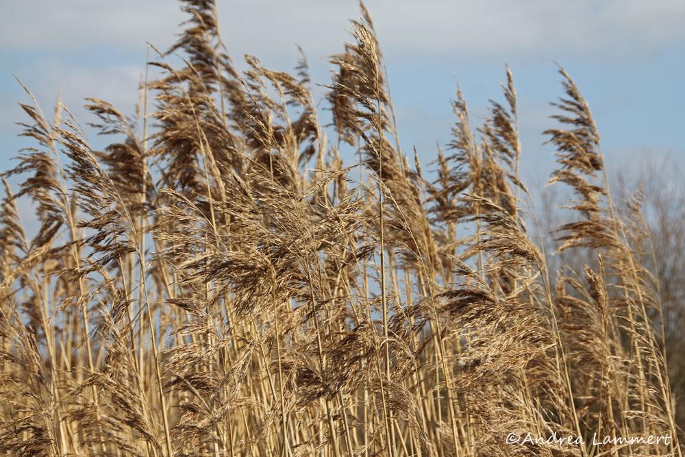 Steinhuder Meer, Meerbruchwiesen, Vogelbeobachtung, Birdwatching, Adler