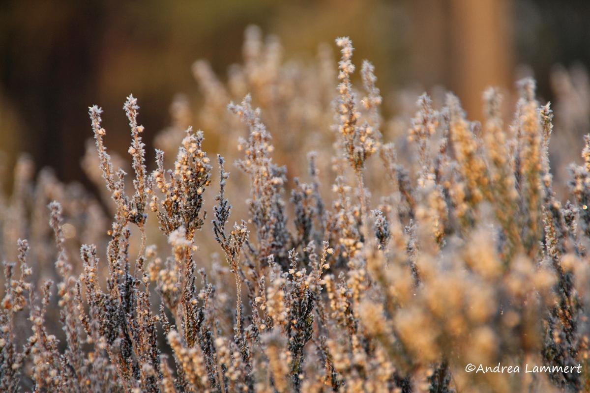 Soltau, ein Morgen in der Heide