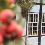 Besuch im Tecklenburger Land und an den Dörenther Klippen