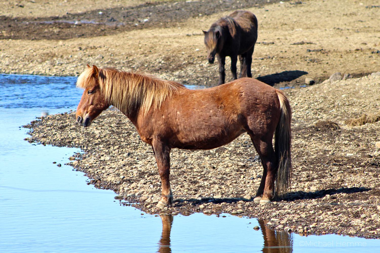 mystisches Island, geheime Plätze, schamanische Reise, Islandpferd