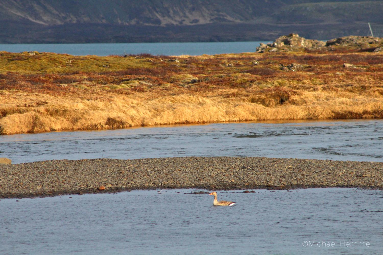 mystisches Island, geheime Plätze, Birdwatching Island