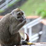 Eigenwillige Tierwelt auf Mauritius