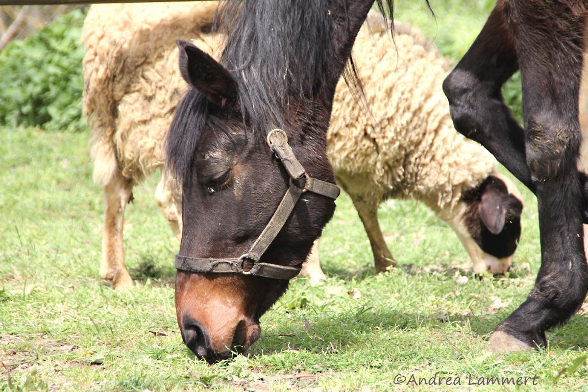Evia, Euböa, Berryland, Landwirtschaft, Superfood, Tipps für Eubäöa, Pferd