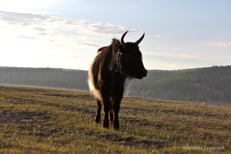 Mongolei, Tal der Schamanen, Lake Hovsgol, Schamane, Oovo, Ulan Uul