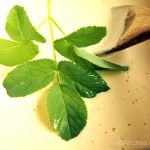 Rezept Giersch im Teigmantel: Unkraut einfach aufessen
