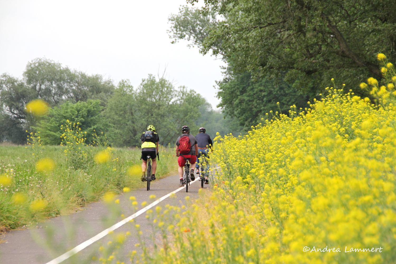 Elberadweg, Tschechien, Veltrusy, Leitmeritz