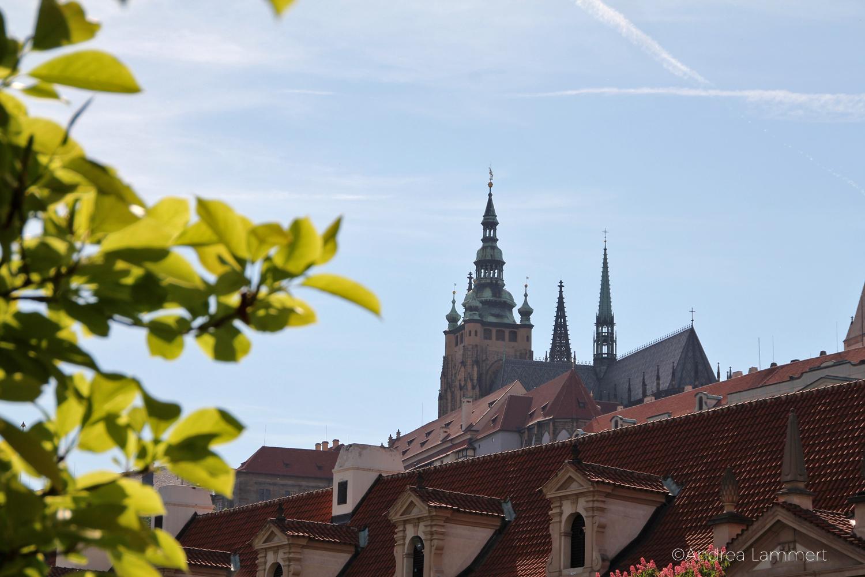 Prag, Top 5, Wallensteinpalais, weißer Pfau