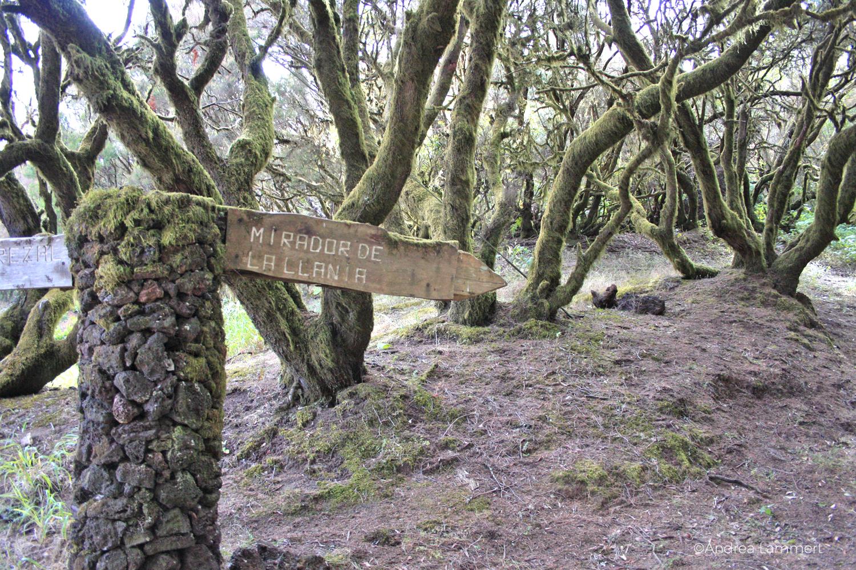 El Hierro, Wandern, kanarische Inseln, Magische Plätze auf El Hierro, Weg nach La Llania