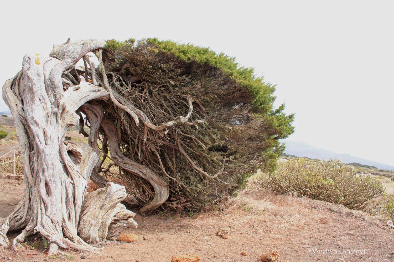 La Sabina, El Hierro, Wandern, kanarische Inseln, Magische Plätze auf El Hierro, Weg nach La Llania