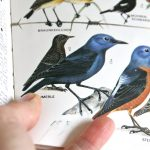 Birdwatching: Tipps zur Vogelbeobachtung