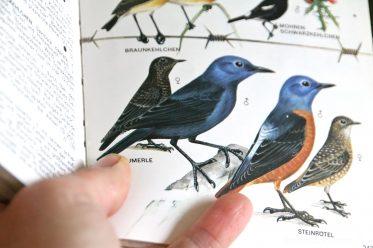 Tipps zur Vogelbeobachtung, das richtige Buch