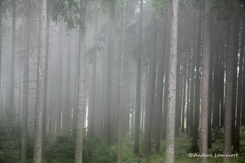 Braunlage, Wurmberg, Seilbahn zum Wurmberg