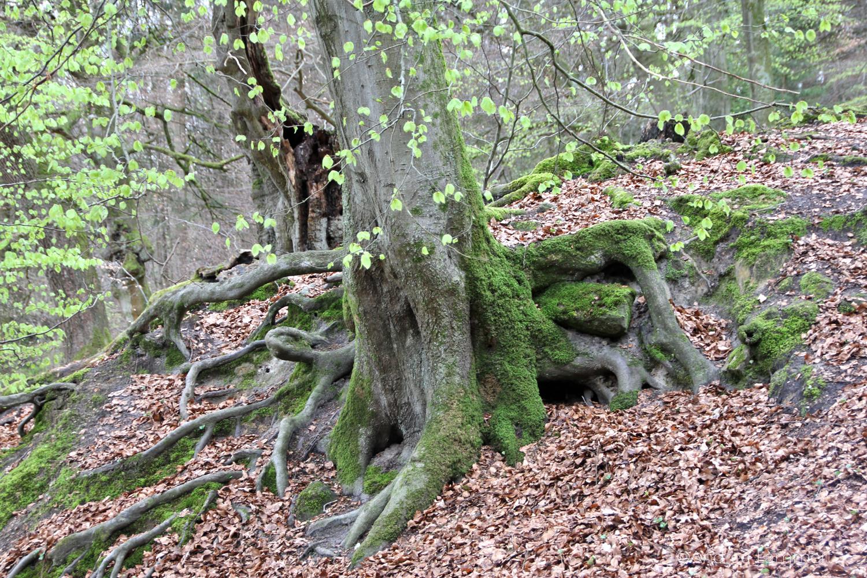 Externsteine, Teutoburger Wald, Bad Meinberg, Bäume um die Steine