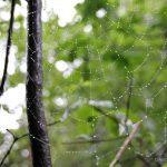 Elfenwanderung auf Juist - Zauberspaziergang mit Feen und Zwergen