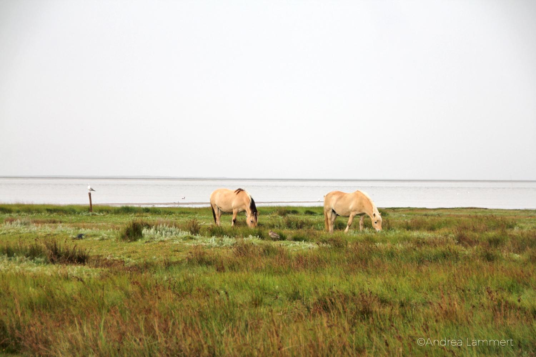 Juist, Tipps, Nordfriesische Inseln