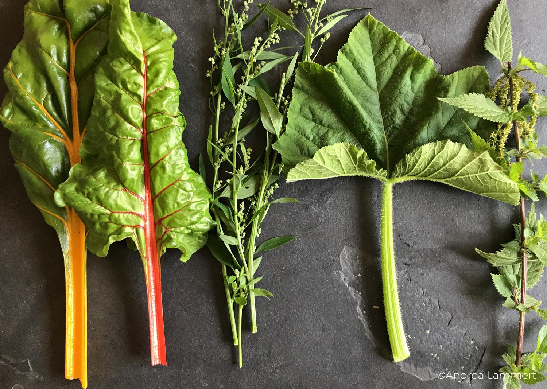 Alternativen zu Spinat: Mangold, Melde, Brennnessel und Kürbisblätter