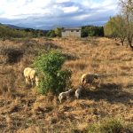 Korsika in der Nachsaison
