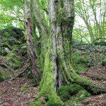 Spessart: Unterwegs im wilden Räuberland