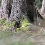 Walderlebnisse: Tierspuren finden in der Natur
