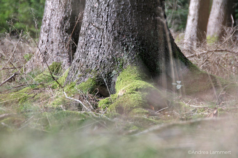 Waldbaden im Spessart, Flöhrsbachtal, Waldtherapie, Hessen