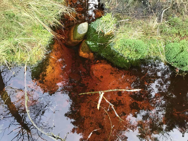 Unglaubliche Orte im Harz, rotes Wasser