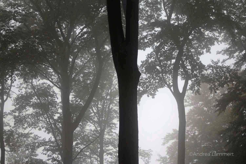Waldzeit, Reise ins Innere,