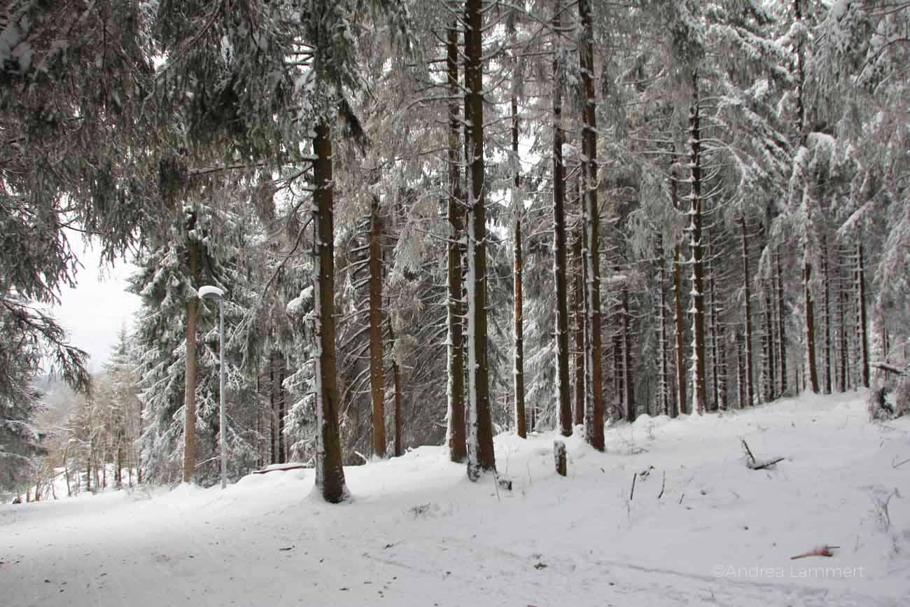 Rodeln im Harz, Hahnenklee,