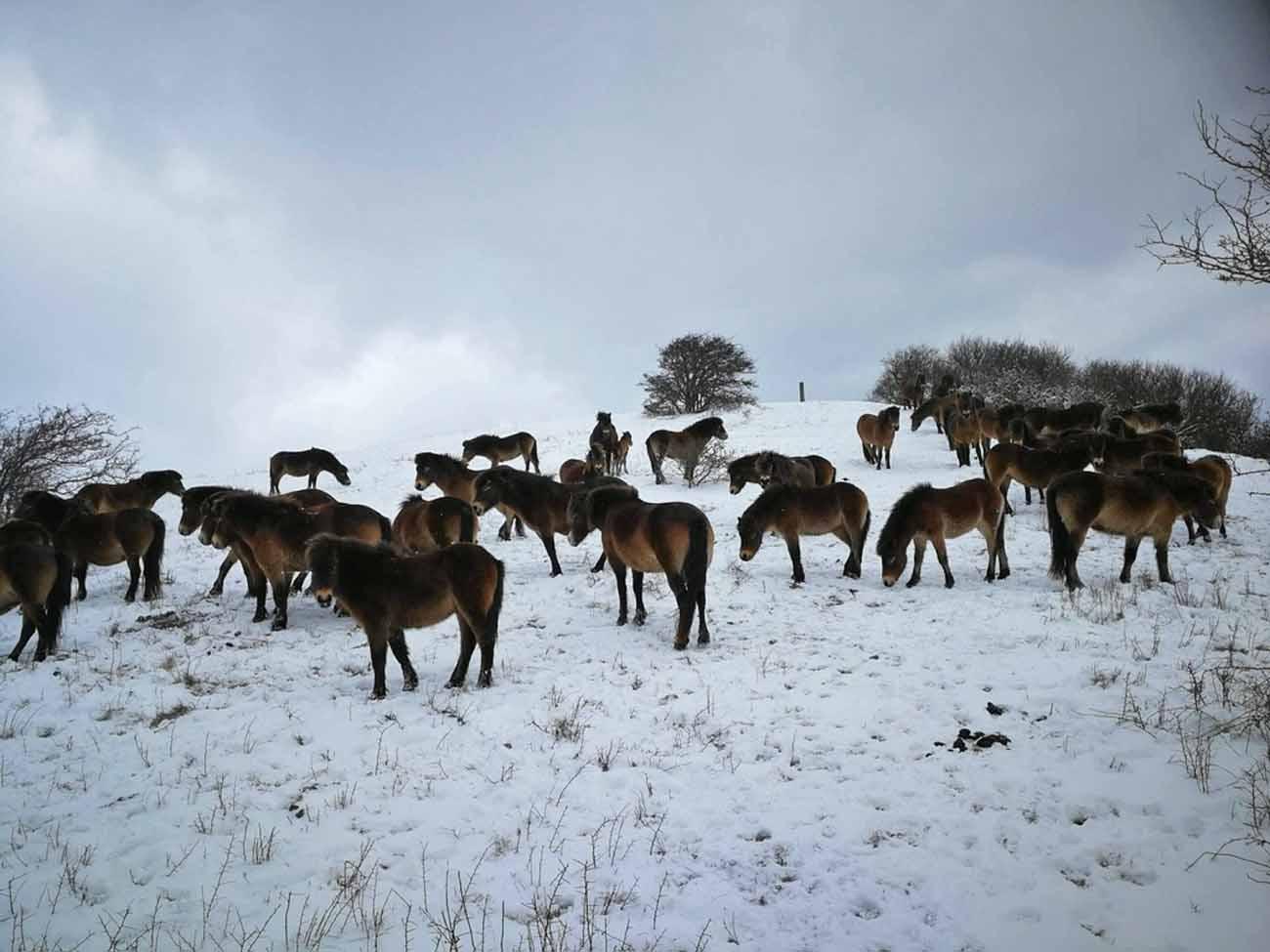 Langeland, Wildpferdea von Bagenkopa