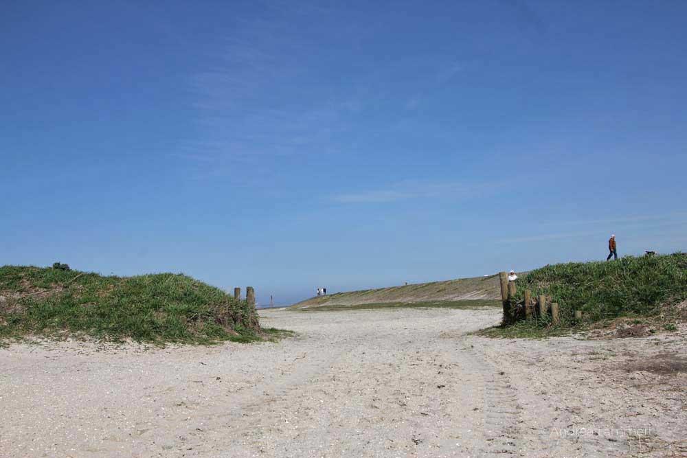 Nordsee, Wangerland, Harle, Harlingersiel, Carolinensiel, Schafe am Deich