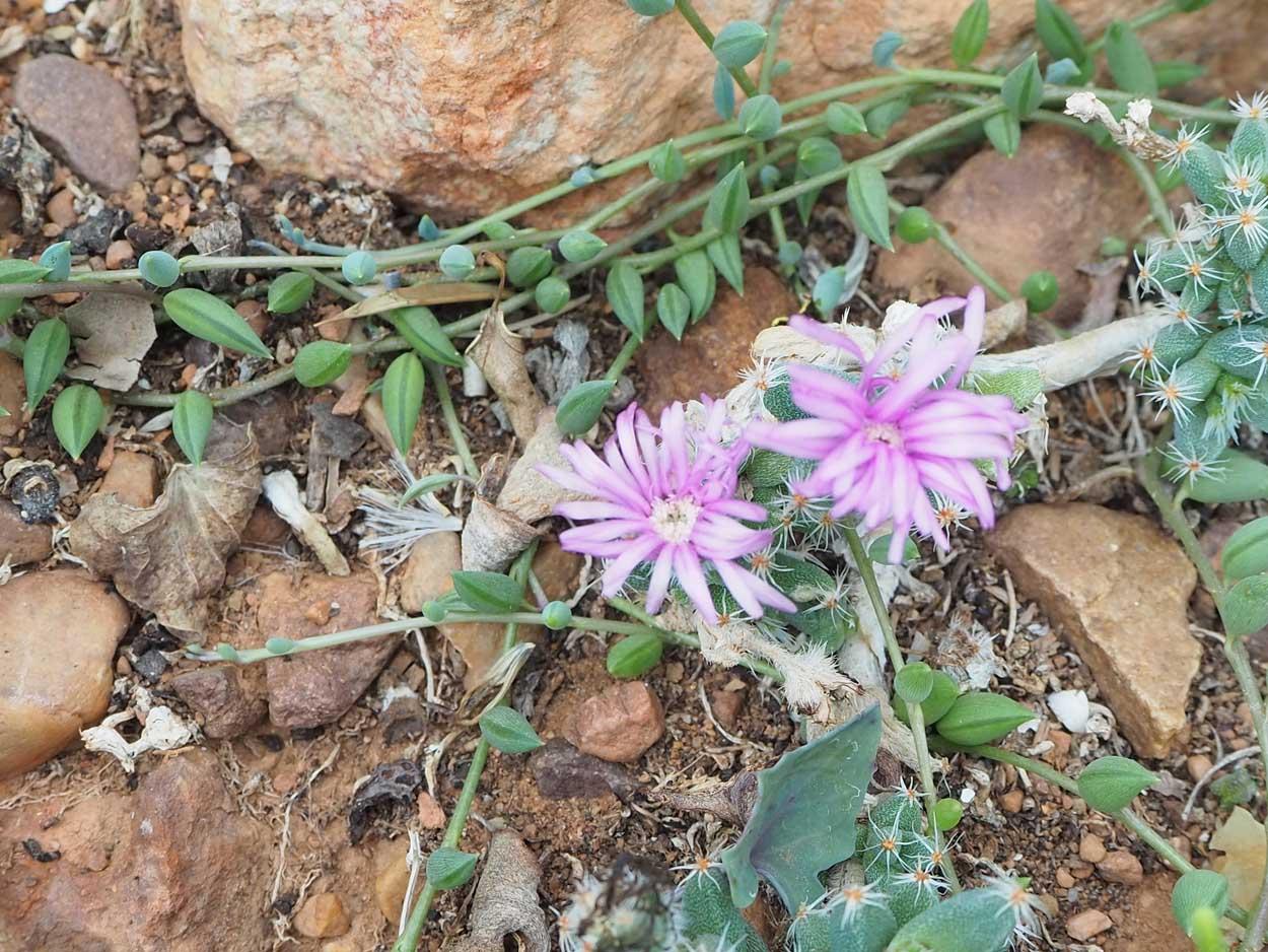 Die Flora im Addo-Nationalpark in Südafrika ist vielfältig