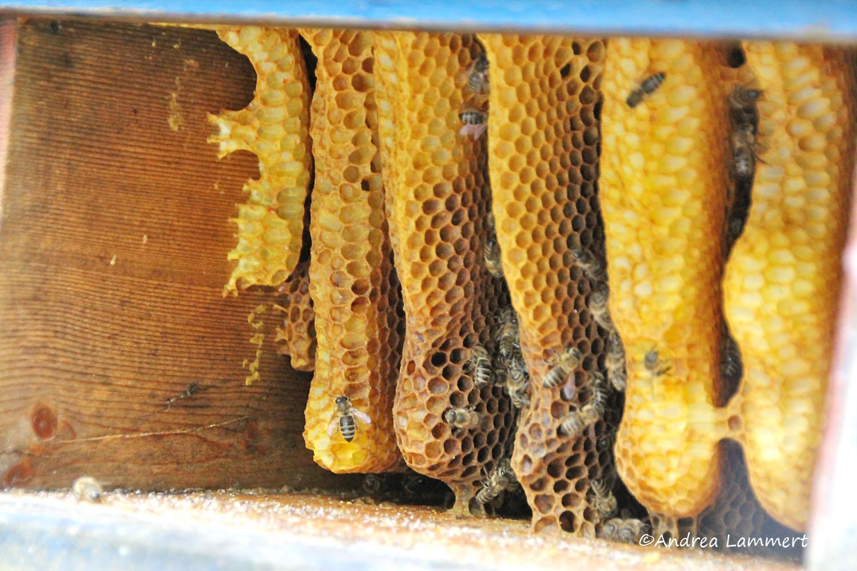 Kärnten, Imker, Bienen im Gailtal, Honig aus Kärnten, Imker Slow Food Kärnten