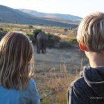 Südafrika: Safari mit Kindern am Pilanesberg