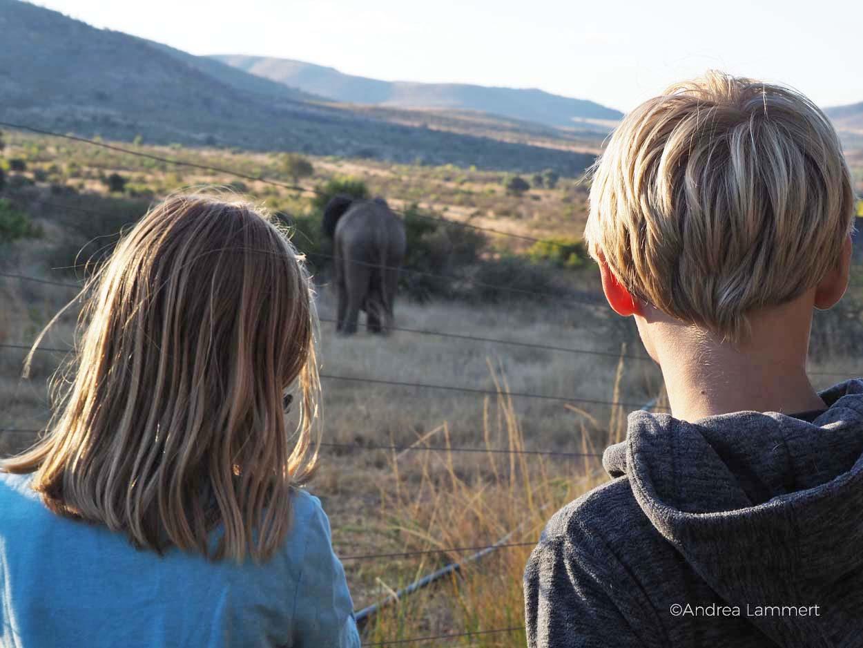 Safari mit KIndern im südafrikanischen Reservat Pilanesberg: Mit Kindern ideal und man sieht oft alle Big 5