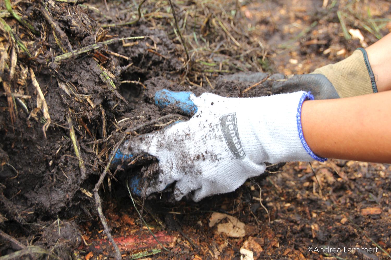 Rügen; Bergwaldprojekt: Klimaschutz auf Rügen, dazu werden die Moore wieder vernässt, eine Arbeit mit vielen Freiwilligen, Volounteering auf Rügen
