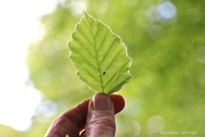 Heilige Pflanzen der Kelten, Irland, Essbare Pflanzen, Kräutermagie der Kelten, Kräuterwissen Irland, Spitzwegerichblüte