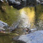 Heilige Wasser: Kraftplätze an Seen und Quellen