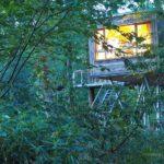 Der Traum vom Baumhaus