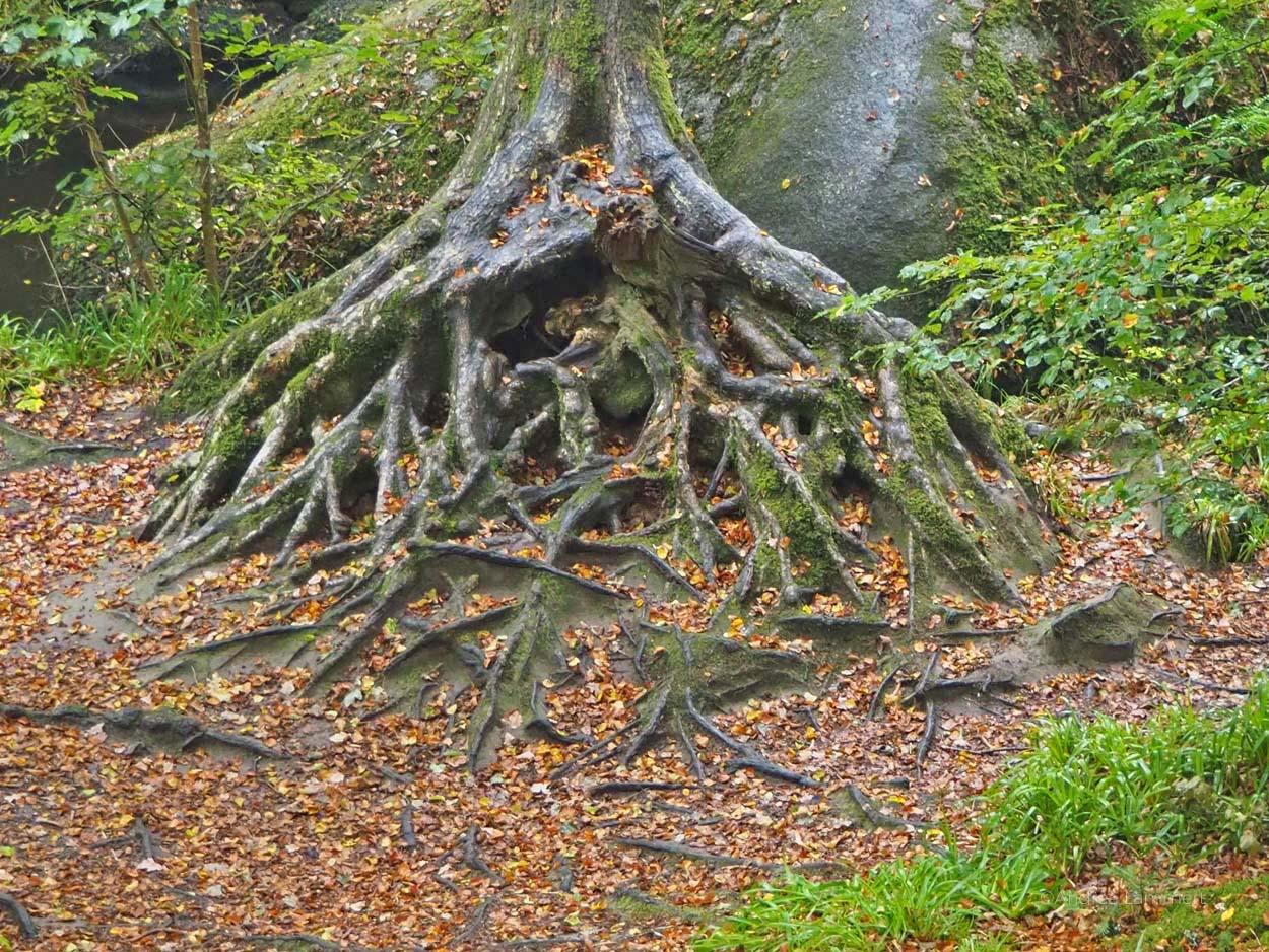 Bretagne Tipps, Huelgoat, Artuswald, Wald der Bretagne, Märchenwald, Anderswelt, Kraftplatz Bretagne, Mystik Bretagne, Keltenplätze Bretagne, Artus-Grotte