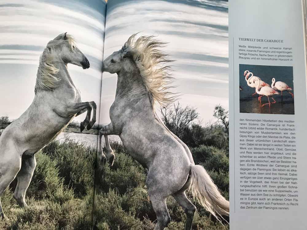 Südfrankreich-Buch gewinnen, Adventskalender