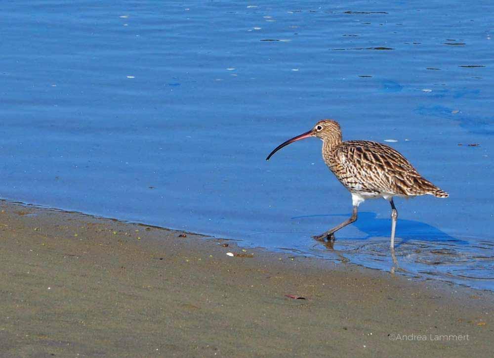 Birdwatching in der Bretagne, Cote des Legendes, Tipps, Vogelbeobachtung in der Bretagne