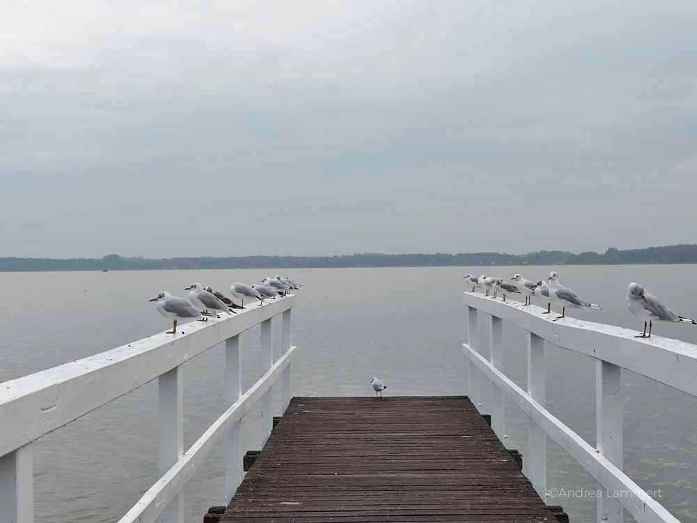 Bad Zwischenahn, Meer, Sehenswürdigkeiten, was ist los, Kurstadt, weiße Flotte, Ammerland