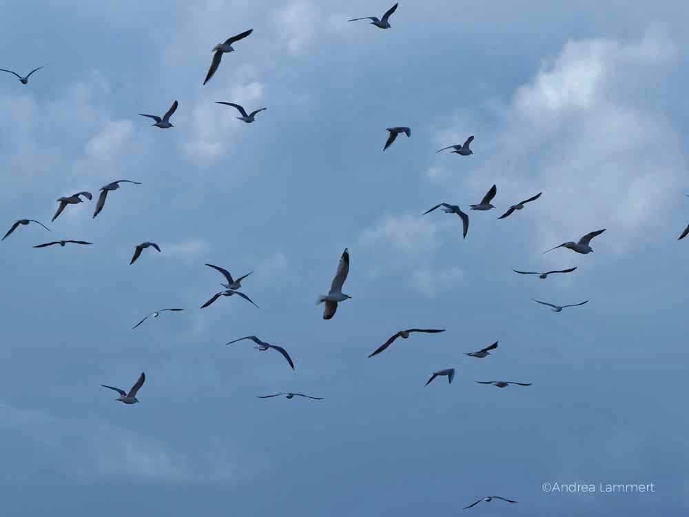 Vogelbeobachtung in Dangast an der Nordseeküste, Birdwatching