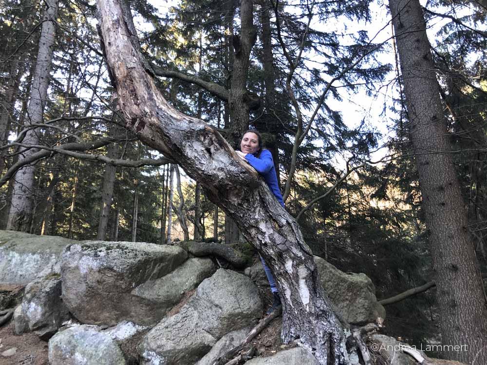 Wandern Wernigerode, Hassende, Ottofelsen: Eine schöne Tour zum Wandern im Harz, mit Zwischenstopp an der Steinernen Renne