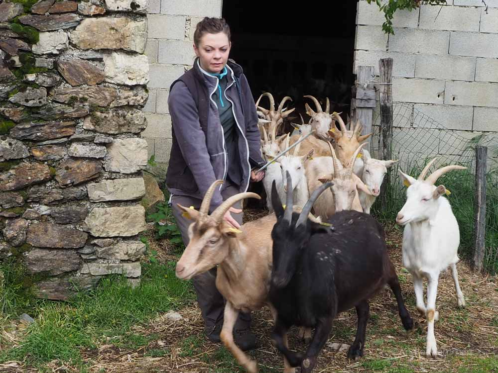 Frankreich, Cevennen, Eseltrekking, Eselwandern, Stevenson, Urlaub auf dem Bauernhof, Ferme des Cevennes