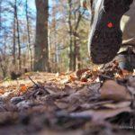 Harz: Wandern zum Ottofelsen
