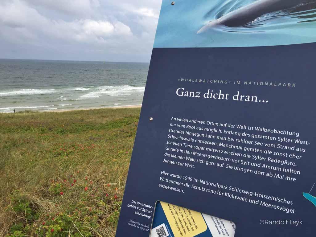 Walbeobachtung an der Nordsee, Sylt ist ein Hotspot, um Schweinswale zu sehen, es gibt sogar einen Walpfad zum Wandern, dort kann man Schweinswale von der Küste aus sehen.