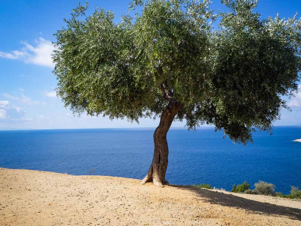 Thassos. Griechenland. Inseln, Karte, Reiseführer, Golden Beach,