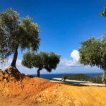 Thassos -  Griechenlands Oliveninsel
