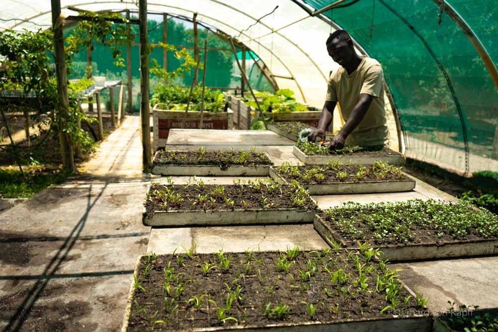 Insekten in Südafrika, Grootbos bei Hermanus, Hoteleigene Farm baut Gemüse an