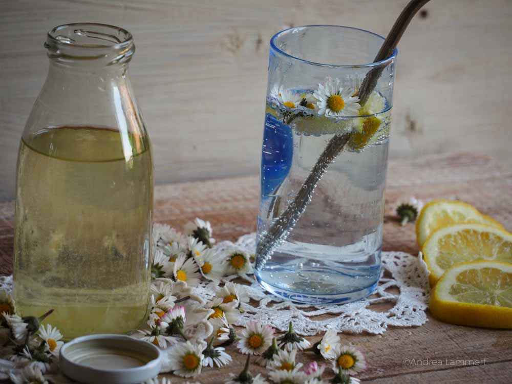 Gänseblümschen Rezepte Heilwirkung